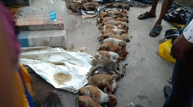Women Clobber 15 Puppies To Death With Pole - ViralTab