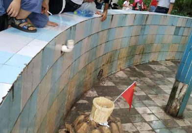 China Zoo Slammed For Sticking Pot On Tortoise For Coins
