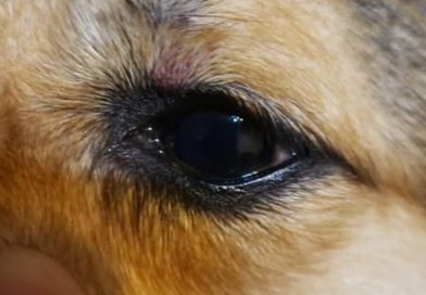 Pet Salon Owner Charged Over Beaten Pets
