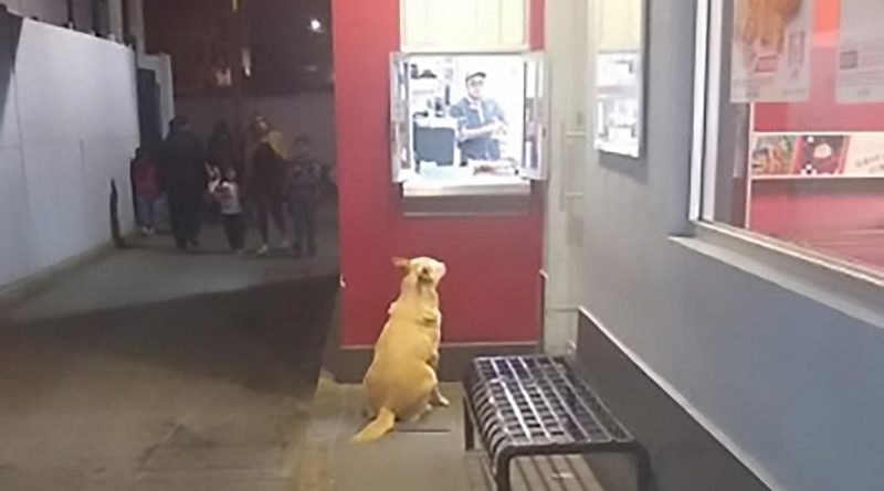 Stray Dog Patiently Waits Outside KFC For Its Dinner