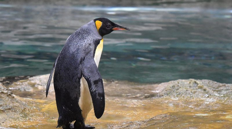 World's Oldest Penguin Dies At German Zoo Aged 46