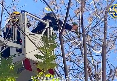 Squawk About Brave: Woman Rescues Parrot 70ft Up a Tree With Firefighters' Ladder