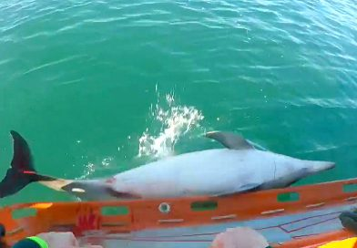 Dolphins Stranded In Europe's Strongest Tides, Rescued and Released