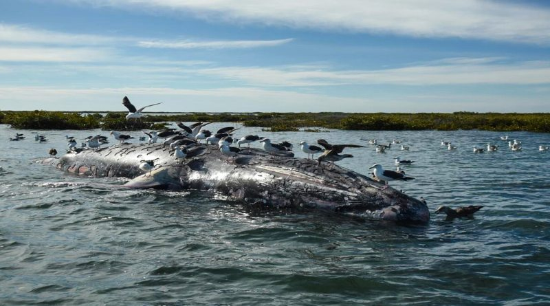 Thinning Out: How Global Warming Is Starving Whales, Say Scientists