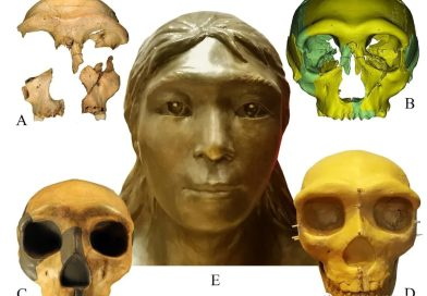Experts May Have Found Worlds Oldest Human Remains Ever That Could Date Back 331,000 Years